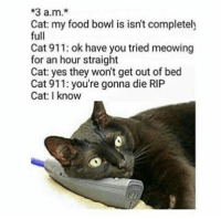 thumb_3-a-m-cat-my-food-bowl-is-isnt-completely-full-20613215.png